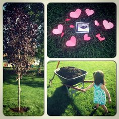 I would have a forest.  :(   first comes love: Plant a tree to honor your pregnancy loss on due date.