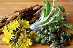 Using all parts of the Dandelion plant - numerous recipes
