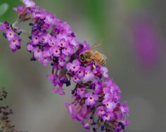 Meant to Bee: Hives, and Honey, Just Out the Back Door: Get your start at an RU Beekeeping course! #NJBeekeeping #bee #bees #beekeeper #beekeeping #NJ #Rutgers