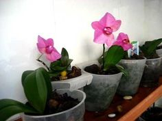 REPRODUCCION DE ORQUIDEAS EN CASA Orchid Plants, Orchid Care, Plant Decor, Garden Projects, Bonsai, Cactus, Garden Landscaping, Diy And Crafts, Make It Yourself