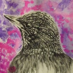 Starling - ink and pencil on paper. 2013