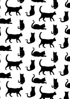 cats:o