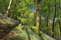 Lady's Walk at Hafod Estate, Aberystwyth? Yes please!