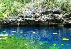 Live the magic of Cenote Há in Xenotes Tour.