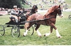 Photo Archive Nebo Brenin Royal Welsh Show Driving - Wagons 1987 : Rainhill Welsh Cobs