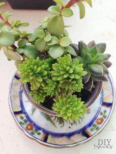 succulent planters, teacup garden at diyshowoff.com: