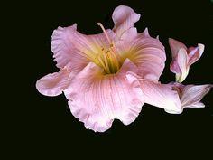 Vividly close floral piece...