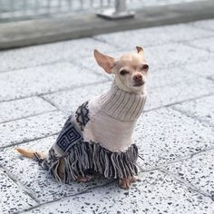 e9ce843bf129 Get this trendy Pisac Poncho for your fur child! Designer dog clothing
