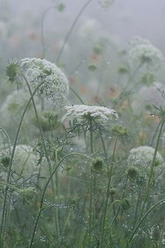 Misty early morning in the meadow at grandpa's farm.