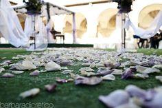 Barbara Di Cretico Photography   flowers