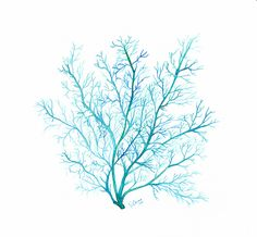 Turquoise blue Coral print, watercolor sea fan illustration - Beach home decor, Archival giclee print on fine art paper Turquoise Home Decor, Turquoise Wall Art, Coral Art, Bleu Turquoise, Watercolor Sea, Watercolor Illustration, Watercolor Paintings, Fan Coral, Coral Blue