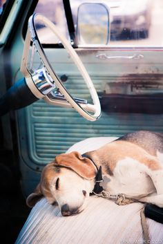 Sleeping in the car. So sweet.