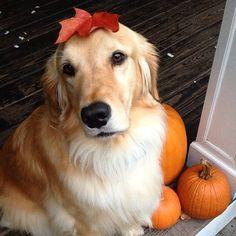 Dog with leaf