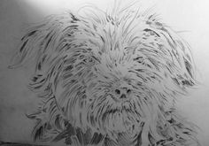 The start of another canine portrait, this one's a bit more of a challenge, due to all that hair!!