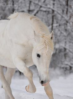 Beautiful in white along with the SNOW!