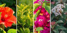 🌷🌳🌼🌺 Επιλέγουμε τα πιο όμορφα και ανθεκτικά φυτά για να φυτέψουμε σε περιοχές που βρίσκονται κοντά στη θάλασσα. Λούλουδια, θάμνοι και δέντρα που αντέχουν σε παραθαλάσσιες περιοχές για να προσθέσουμε χρώμα και να ομορφύνουμε το σπίτι μας.