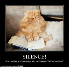 Have you noticed your cat plotting lately?