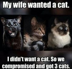 71 Best Funny Cat Sayings... images in 2019 | Funny cats ...