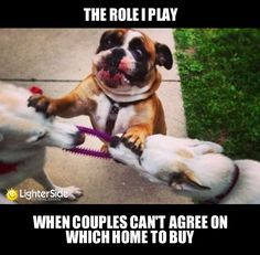 U guys funny cute dogs pets hilarious humor funny animals cool images Funny Animal Memes, Dog Memes, Funny Animal Pictures, Dog Pictures, Funny Photos, Funny Dogs, Cute Dogs, Funny Animals, Cute Animals