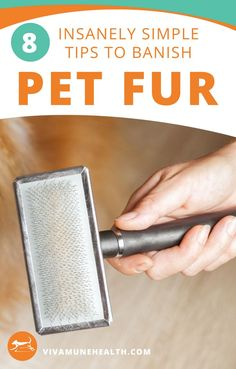If you have indoor #pets, then you are no stranger to the shedding of fur. Having #animals indoors, can mean constant #cleaning of fur off of furniture and clothes.... but it doesn't have to be this way! We have good news for #dogowners and #cat owners alike! Although we cannot totally eliminate the shedding of fur 100%, because it is a natural process for your pet, we can share 8 simple steps to help banish the excessive hairballs hanging around your home.