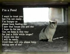 Cat Care Kittens A Feral Cat's Plea - Kittens Whiskers Cat Quotes, Animal Quotes, Save Animals, Animals And Pets, Funny Animals, Beautiful Cats, Animals Beautiful, Cute Cats, Funny Cats