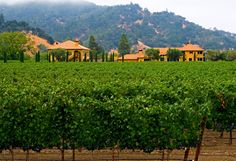 Sabe qual o país que mais exporta vinhos para o Brasil? O Chile!