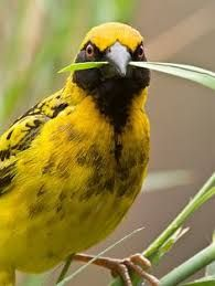 Image result for worlds awesome birds
