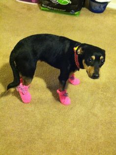 Boots I made for my doggie. Vinyl is sewn on the bottoms