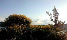 https://flic.kr/p/vrVAJX | #Cespugli #ginestre #natura