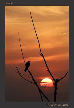 Pôr-do-sol. Sozinho. Passeando pelos caminhos poeirentos da vida Tenho pensado muitas vezes Porque eu? Porque eu? Sempre o perdedor e sempre sozinho. Fotografia e texto: Yasir Nisar no Flickr.