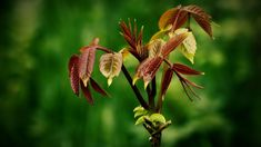 Plant Pictures, Water Plants, Flower Photos, Trees To Plant, Flora, Herbs, Leaves, Awesome, Beautiful