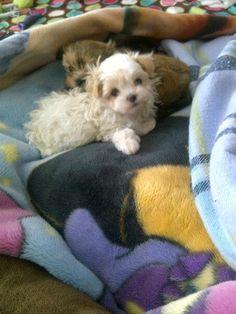 :-) my fur baby