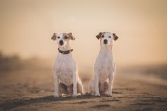 Sunrise by Heavenly Pet Photography  - 500px