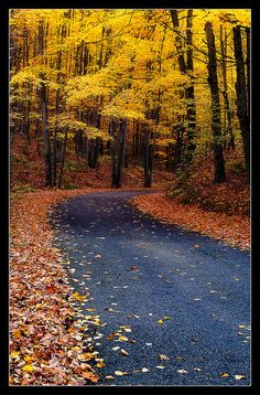 Amazing autumn path, Michigan