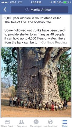 One of the oldest living things on Planet Earth, shown is the year old Tree of Life located in South Africa. Cheap Flights And Hotels, Fly Travel, Baobab Tree, Old Trees, Fictional World, Growing Tree, Patterns In Nature, Tree Of Life, Planet Earth
