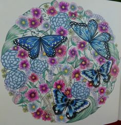 Butterfly Ball from Millie Marotta'a Animal Kingdom #milliemarotta
