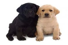 dog training treats is essential in minute amounts for having positive results when training your dog or puppy...  - DogSiteWorldStore - http://dogsiteworld.com/