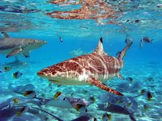 Sailing to a land down under: Exotic South Pacific Charter Destinations