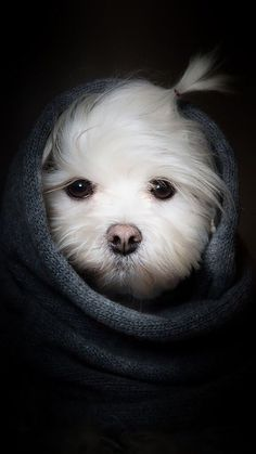 Animals Wallpapers iPhone : Animals wallpaper iPhone dog