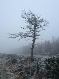 Vinter tåge