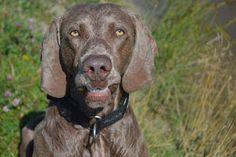 Gårdstunet Hundepensjonat: Varmt og godt, og glade hunder på tunet!