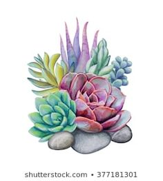 Watercolor Succulent Plants Floral Isolated No 373306195 stock illustrations, images and vectors - watercolor succulents, decorative illustration, floral clip art isolated on white background - Cactus Painting, Cactus Art, Painting & Drawing, Illustration Blume, Botanical Illustration, Succulent Tattoo, Watercolor Succulents, Succulents Painting, Planting Succulents