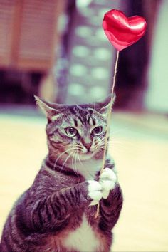 """#cat #heart #love Cat with a red heart balloon. Support """"Southern California Cat Adoption Tails"""" www.catadoptiontails.com"""