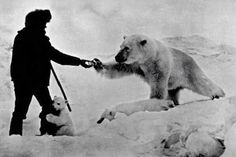 1970's Russia, a man feeds polar bears milk