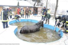 In 2010 - Zaki the horse fell in a neighbour's pool and had to be rescued. Step one was officers draining out the water... GERMANY