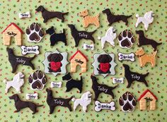 Dogs at the kennel | Cookie Connection