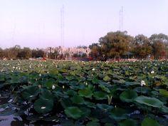 荷花 Beijing China, Plants, Plant, Planting, Planets