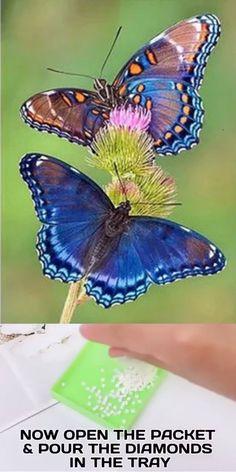Butterfly Drawing, Butterfly Painting, Butterfly Crafts, Butterfly Wallpaper, Most Beautiful Butterfly, Beautiful Bugs, Beautiful Flowers, Butterfly Kisses, Butterfly Flowers