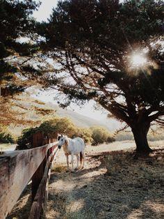 Horse Acre//