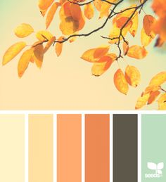 Design seeds + color atlas by archroma® Fall Color Palette, Colour Pallette, Colour Schemes, Color Combos, Color Patterns, Orange Palette, Design Seeds, Hue Color, Colours